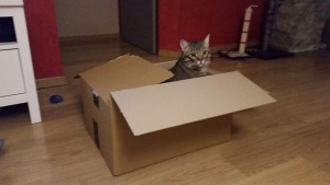 gato-dentro-caja-amazon