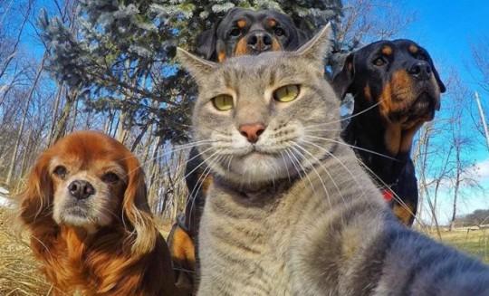 Selfie muy animal: gato_perros_amigos_selfie