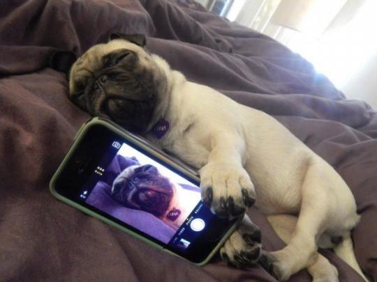 Selfie muy animal: Perro_dormido_selfie