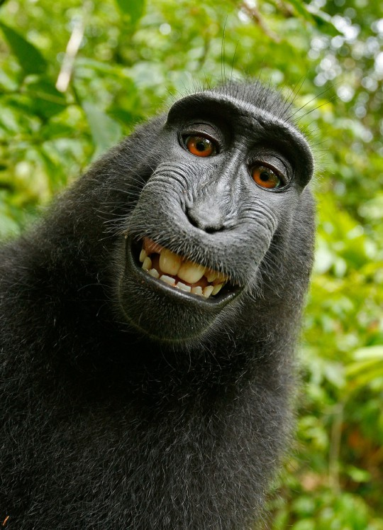 Selfie muy animal: naruto_macaco_animal_selfie