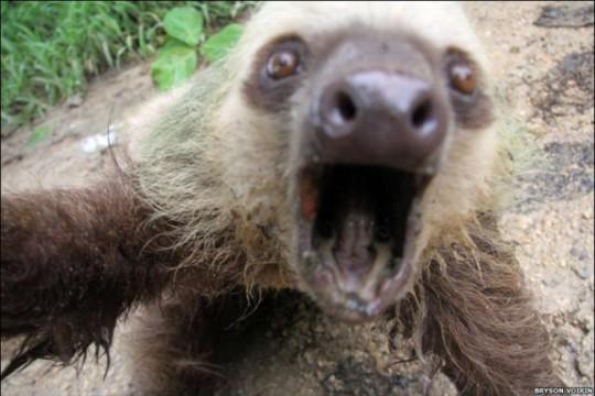 Selfie muy animal: perezoso_selfie